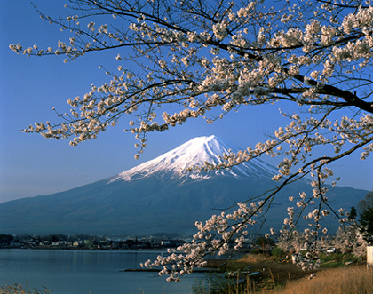 Japón, angustia y dolor