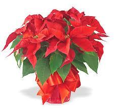 Compartint el significat del Nadal